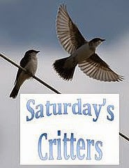 Saturday's Critters Hop
