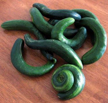 farmer's market cucumbers