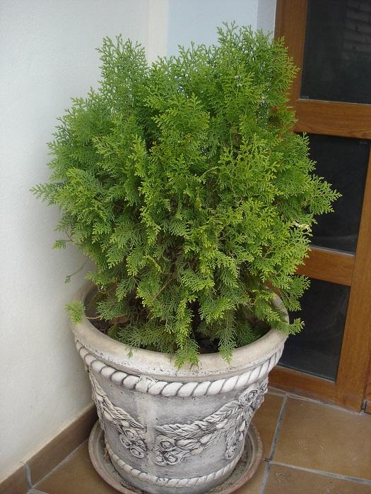 El jard n en macetas tipos de macetas for Jardines en macetas