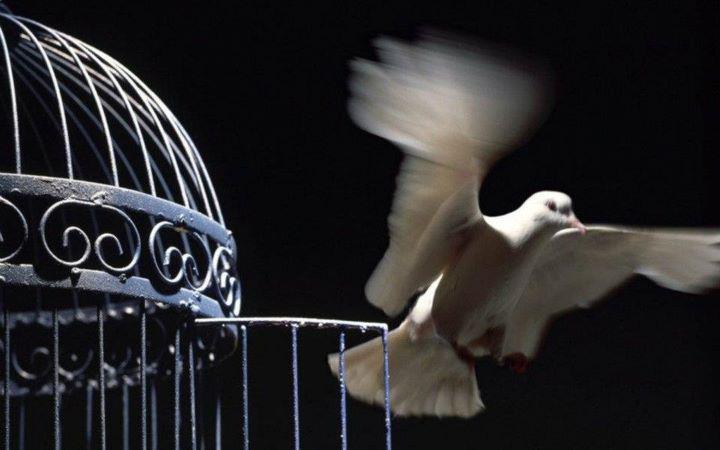 Transmutation..... à la recherche de la paix intérieure ..... ( 4 ) Colombe+s%27envole
