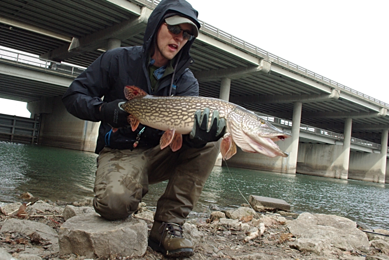 Currents pike on the fly for Pike fly fishing
