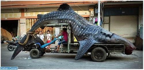 Pelik Nelayan China Bawa Bangkai Ikan Paus Bersiar siar Dengan Lori