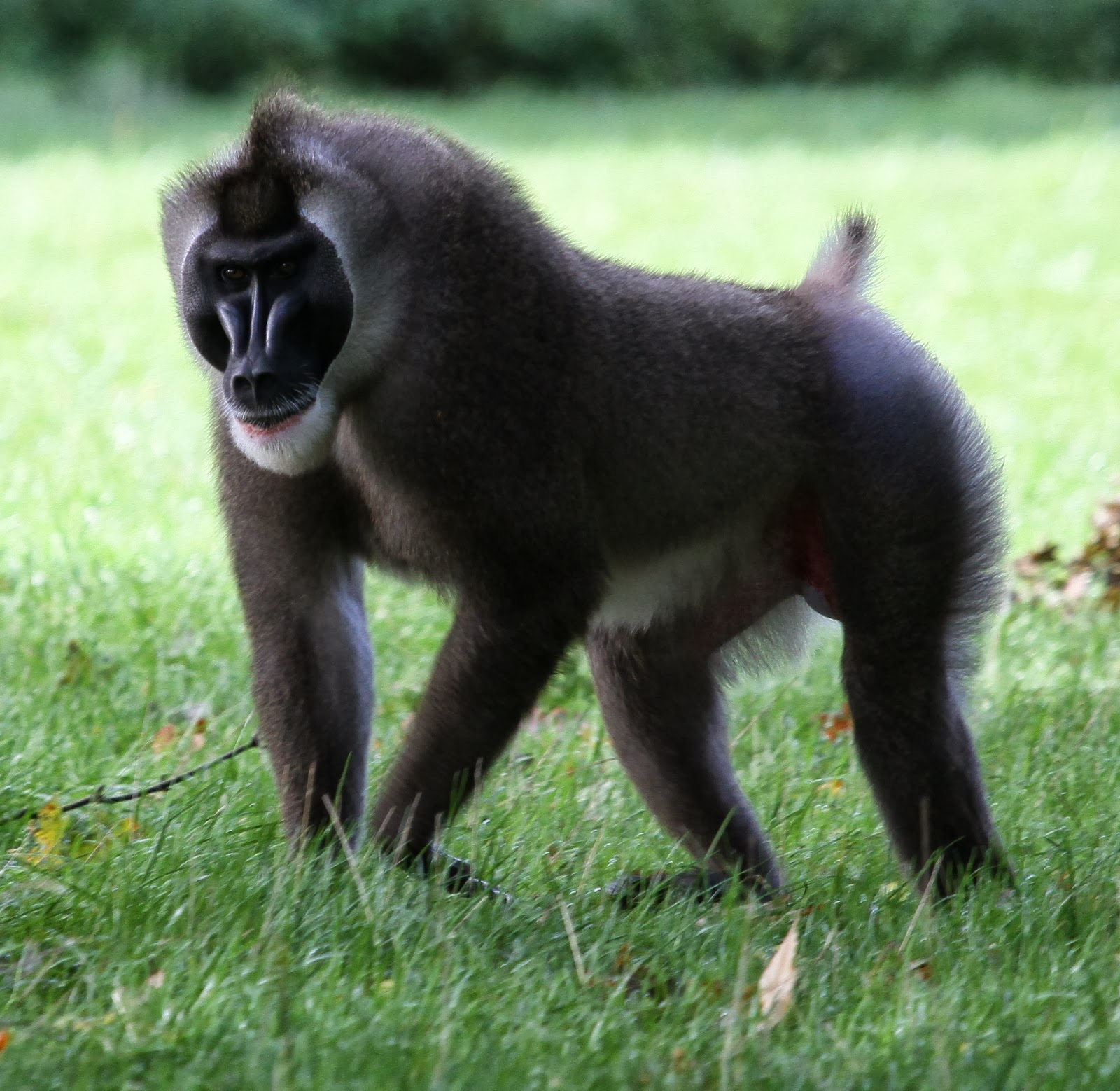 the primate awards wait but why