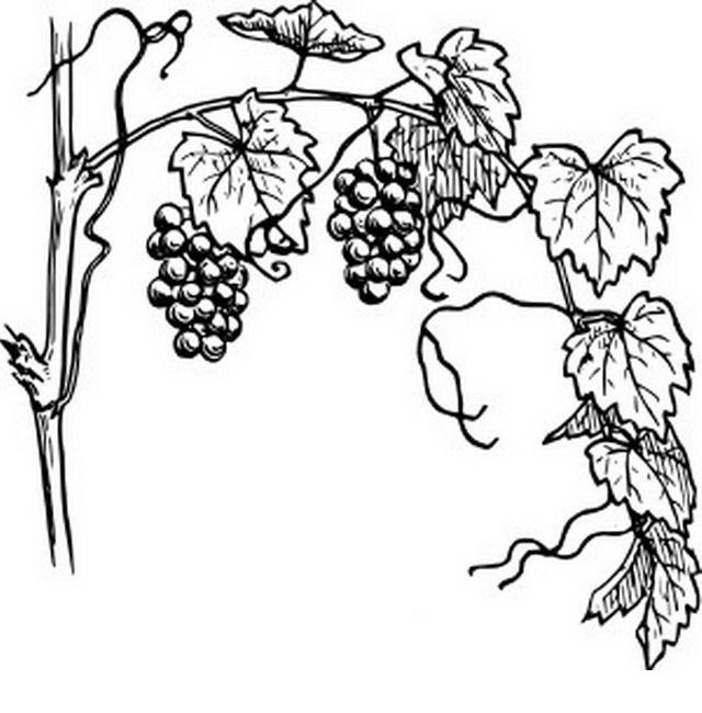 COLOREA TUS DIBUJOS: Frutas para colorear y pintar