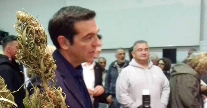 Φαρμακευτική κάνναβη: Άλλη μια μπίζνα του ΣΥΡΙΖΑ που οδηγεί στην νομιμοποίηση των ναρκωτικών