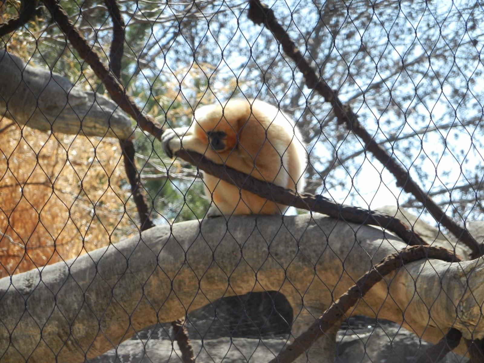 Niabi Zoo Quad Cities