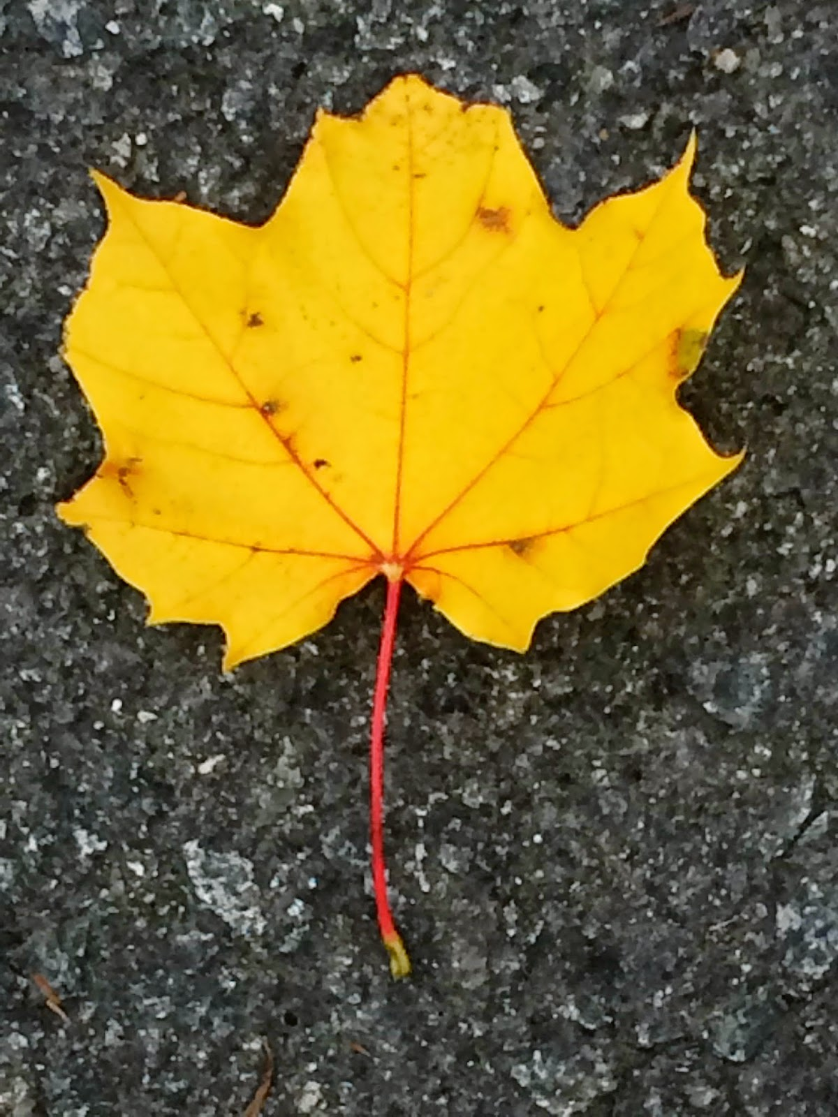 Yellow Leaf  © Kim Moulder, All Rights Reserved.