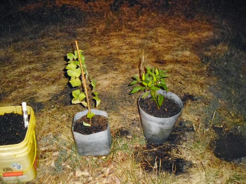 Garden without vacant pots