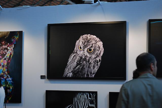 OWL - peleda - hibou - pilkoji peleda