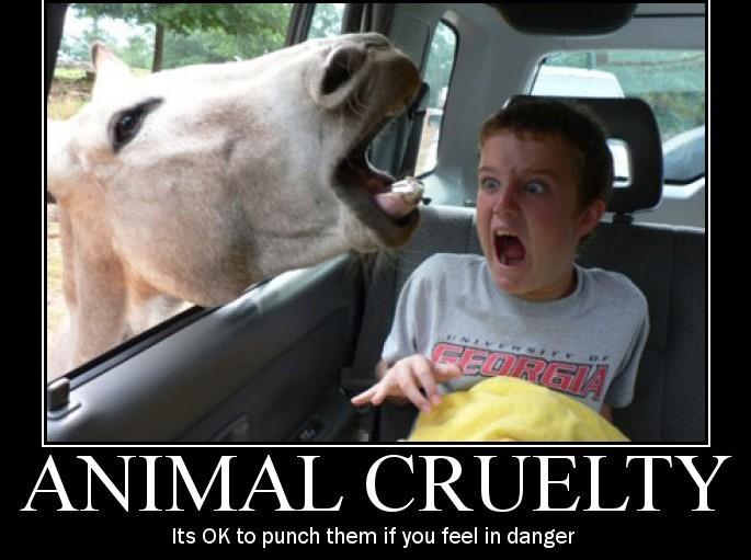 Animal Abuse Quotes Impressive Lovequotes & Fun Animal Cruelty