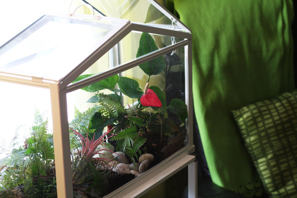 8 Terrarium DIY Projects