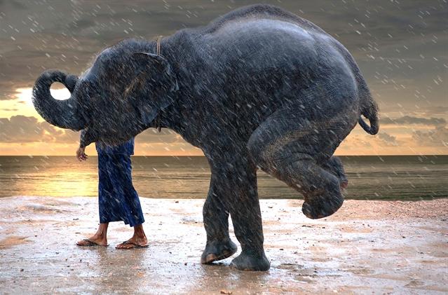 elefante, acrobacia,