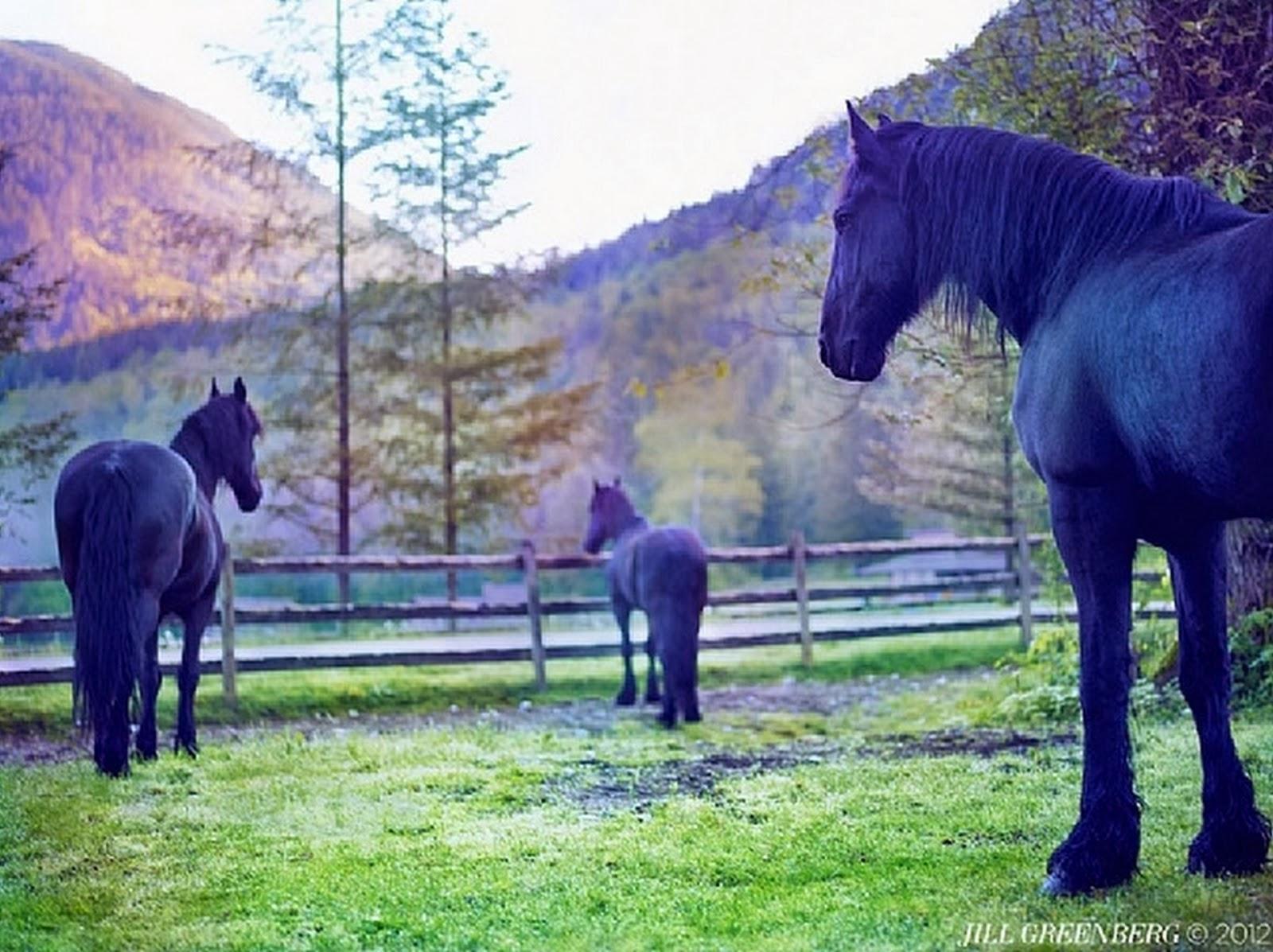 caballos-modernos-pintados-en-oleo