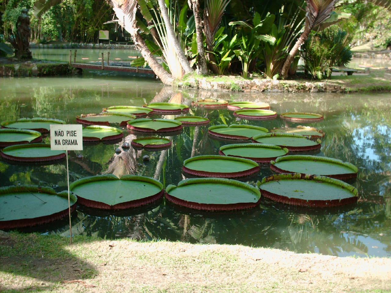 artesanato jardim botanico:Mari Atelier: Jardim Botânico e Vista Chinesa-RJ