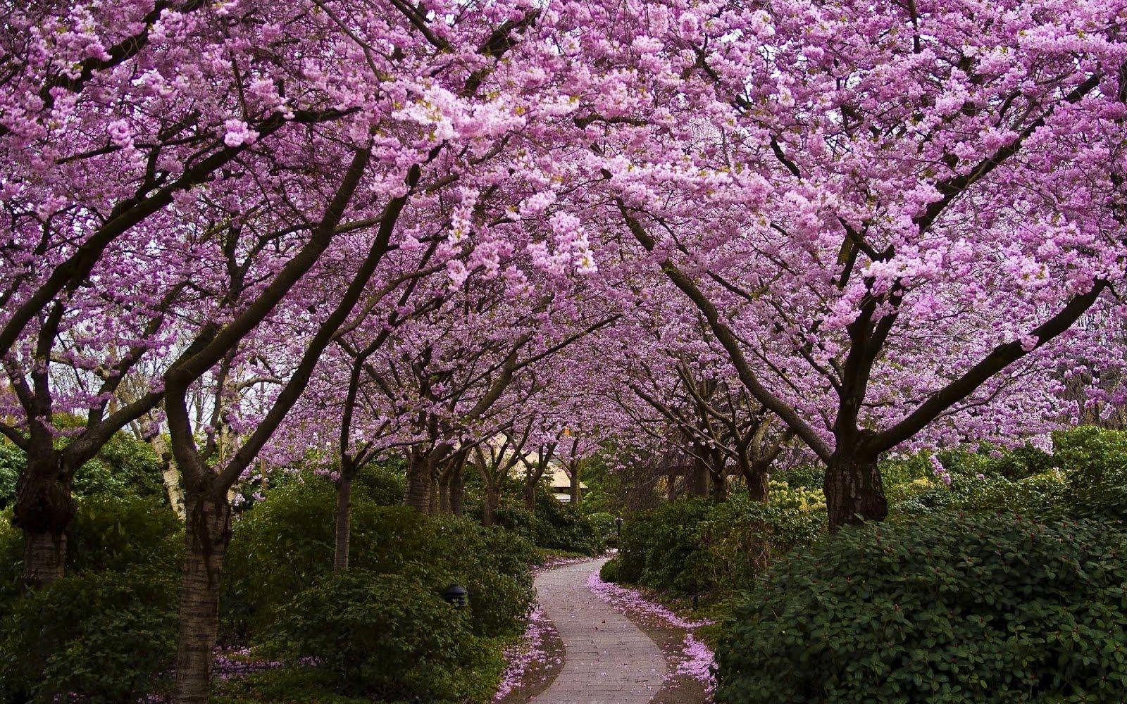Arboles de flores rosadas imagui - Arbol de rosas ...