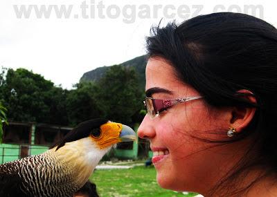 Visitante interage com Gavião-carcará (Caracara plancus) no Parque dos Falcões, em Sergipe