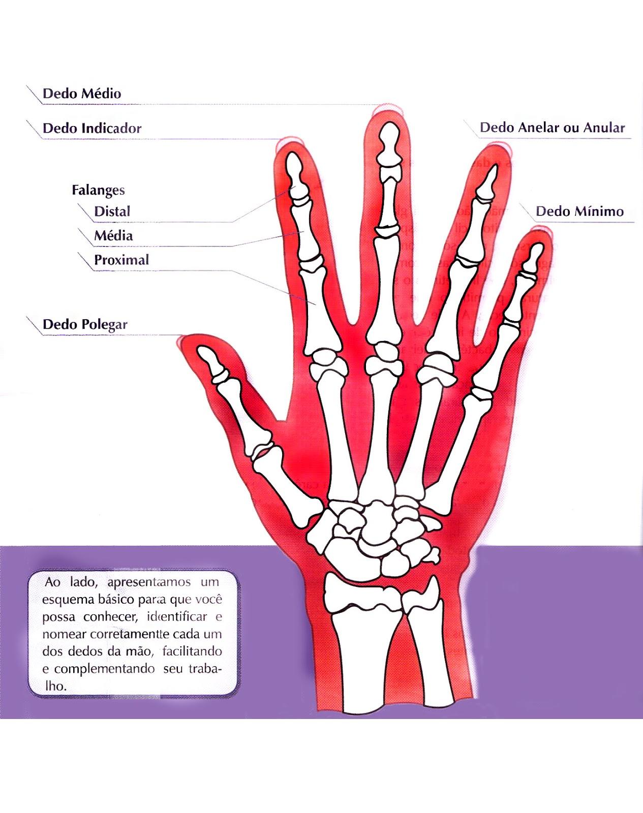 Magnífico Anatomía De Un Dedo Elaboración - Imágenes de Anatomía ...