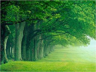 Menanam Pohon Penghijauan