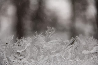 ice on the window pane