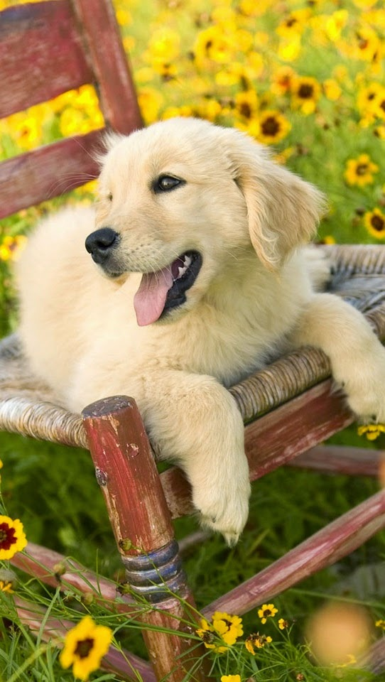 I loved this house only because of the sunflowers and this adorable golden, but the house is really not right for my needs, but I do love this wee pup..