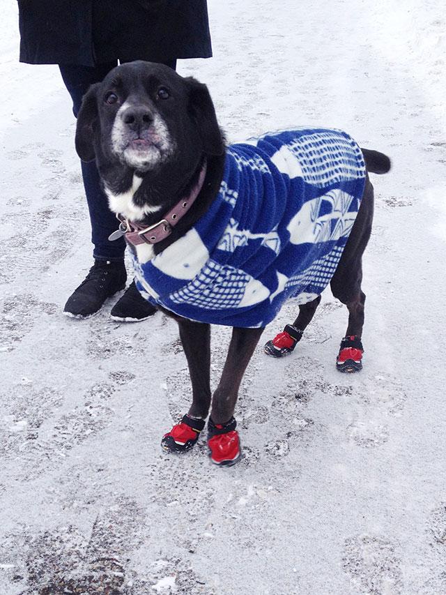 Doria the dog sporting her new homemade jacket (tutorial)