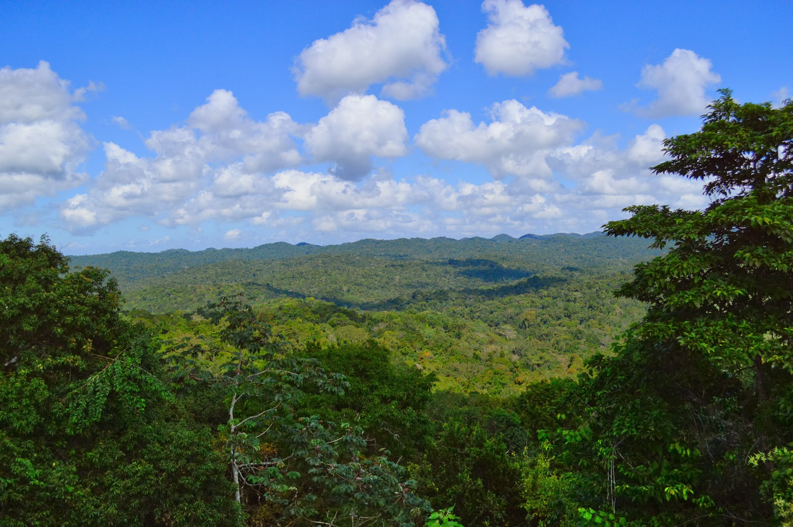 caracol belize view