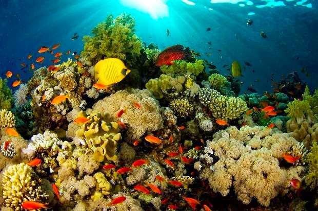 Taman Laut Bunaken - Tempat wisata di manado yang ramai dibicarakan orang