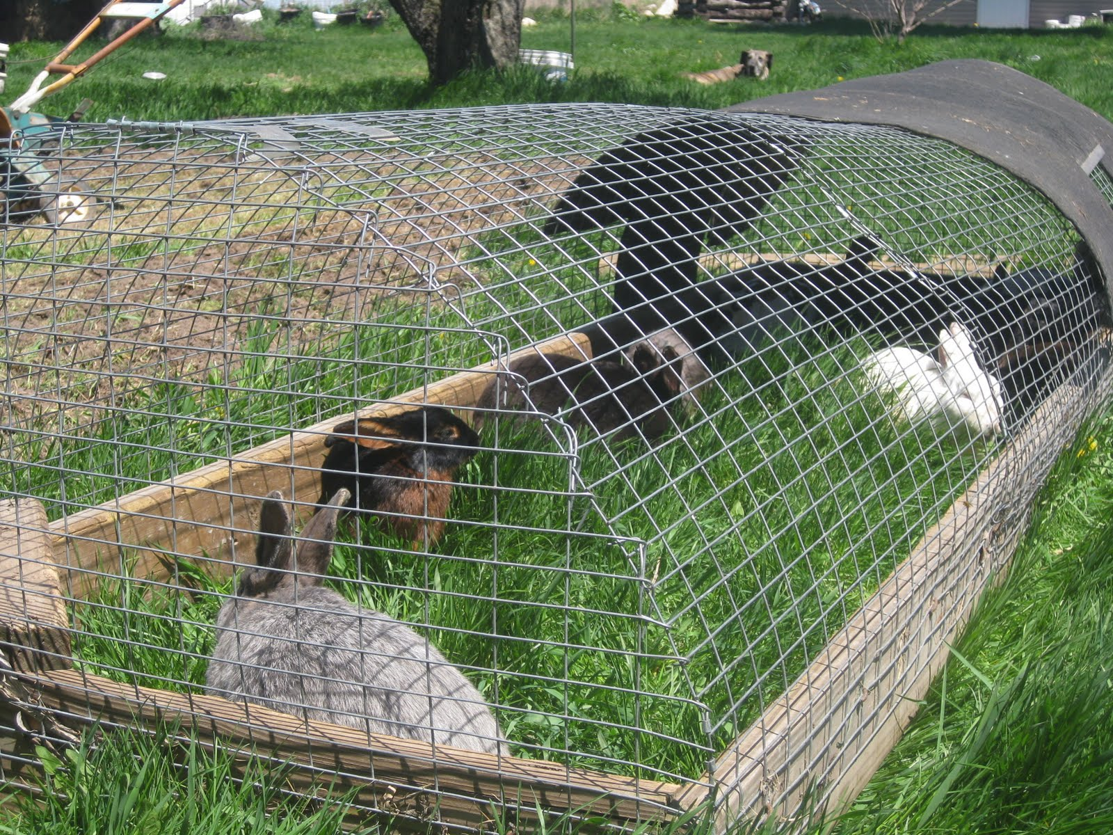 dollyrockfarm: I don't care for mowing the Lawn...Part 1