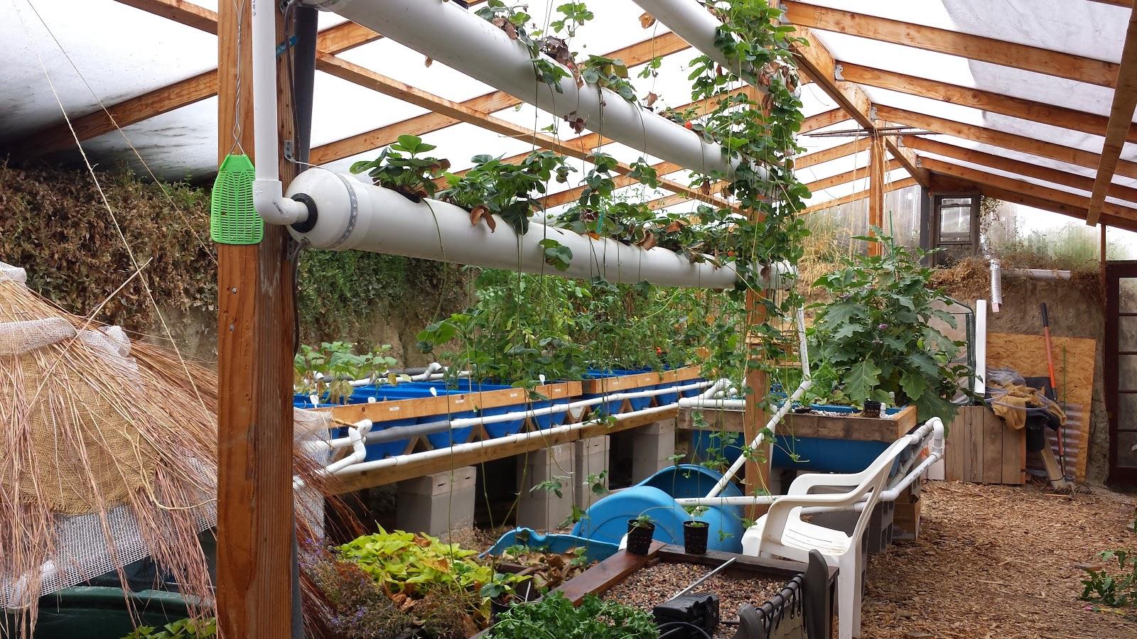 Walipini and aquaponics the walipini growing season for Greenhouse plans designs