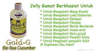 khasiat jelly gamat untuk maag