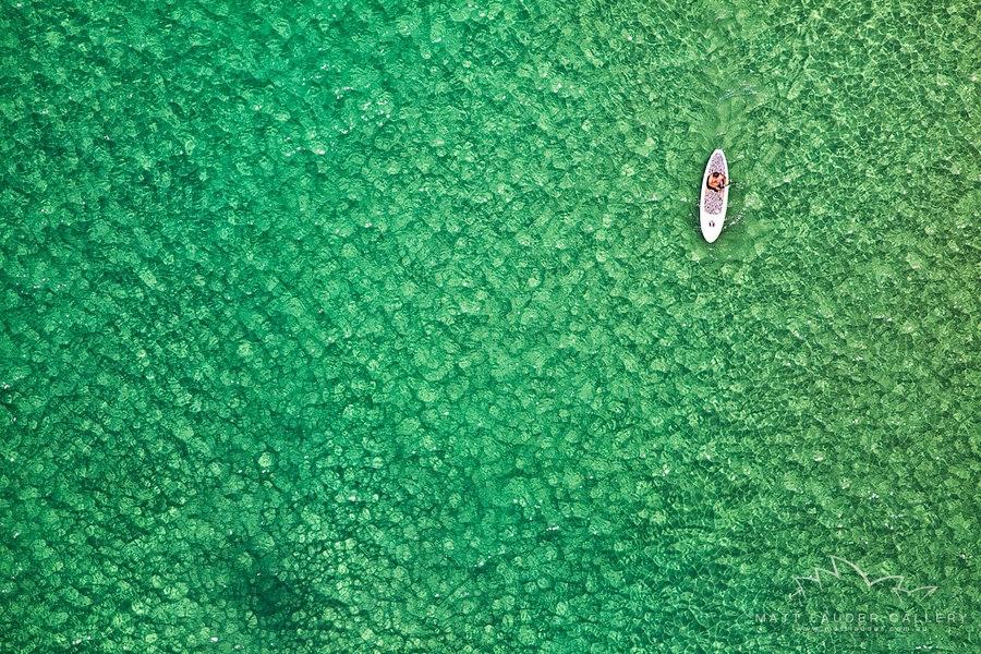 Bondi Paddleboarder By Matt Lauder