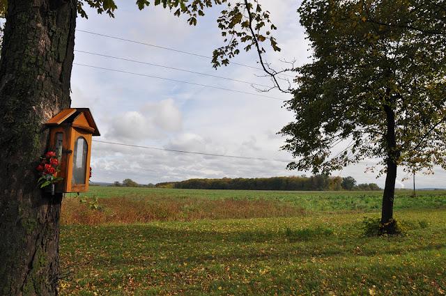 Modliszewice - w głębi kępa drzew nazywana zwyczajowo Gawrońcem. Na jej skraju, od lewej strony dokonano zamachu na Fittginga. Fot. KW.