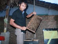 """Angon Lebah Madu Harus Jeli dengan Wilayah """"Berbunga"""""""