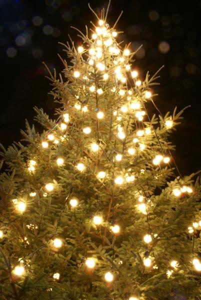 صور تزين الاشجار بمناسبة الاحتفال الكريسماس
