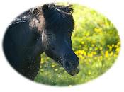 Hestene våre