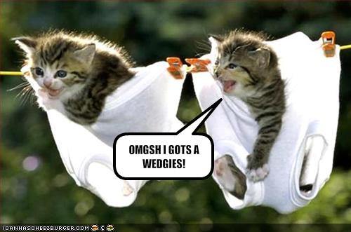 My Top Collection Funny kittens pictures 3