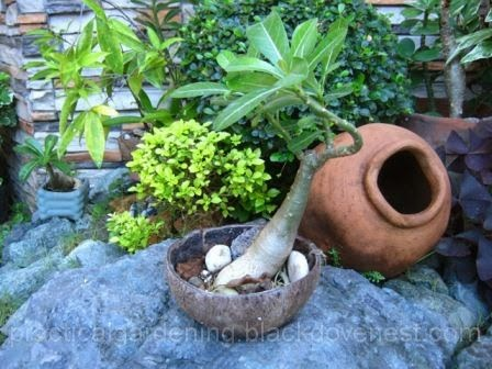 Practical Gardening Cheap Garden Pots Using Coconut Shells