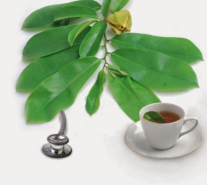 Khasiat Daun Sirsak Sebagai Obat Herbal