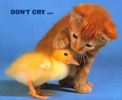 Kucing : jgn sdih2,.aku ade..:d