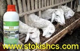 SOC HCS baik untuk ternak