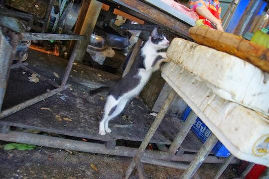 stealing cat