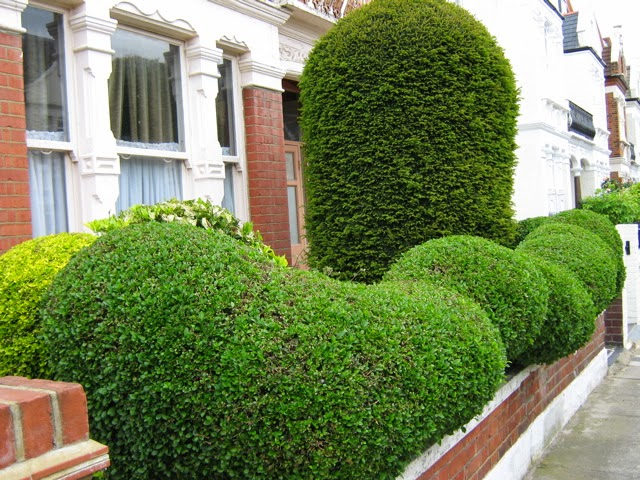 Home and garden garden hedge ideas for Garden design ideas with hedges