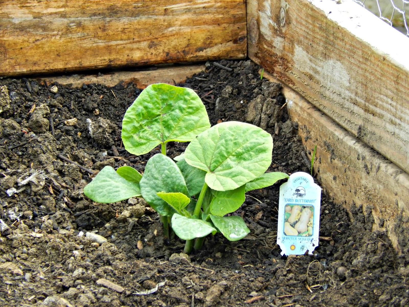 Get Kids Excited About Gardening #RaisingGoodApples AD