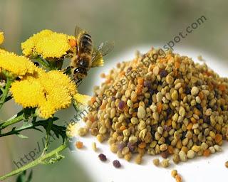 khasiat  manfaat bee pollen