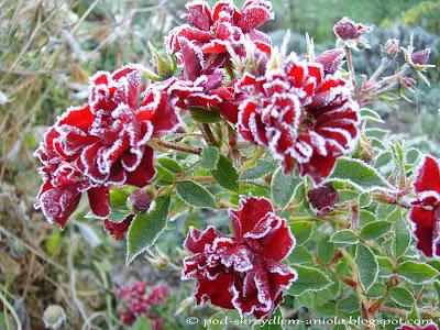 Jesienny ogród zimą mróz kolorowy