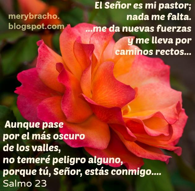 cristianas, salmo 23. Dios está conmigo y es mi fuerza. Frases de