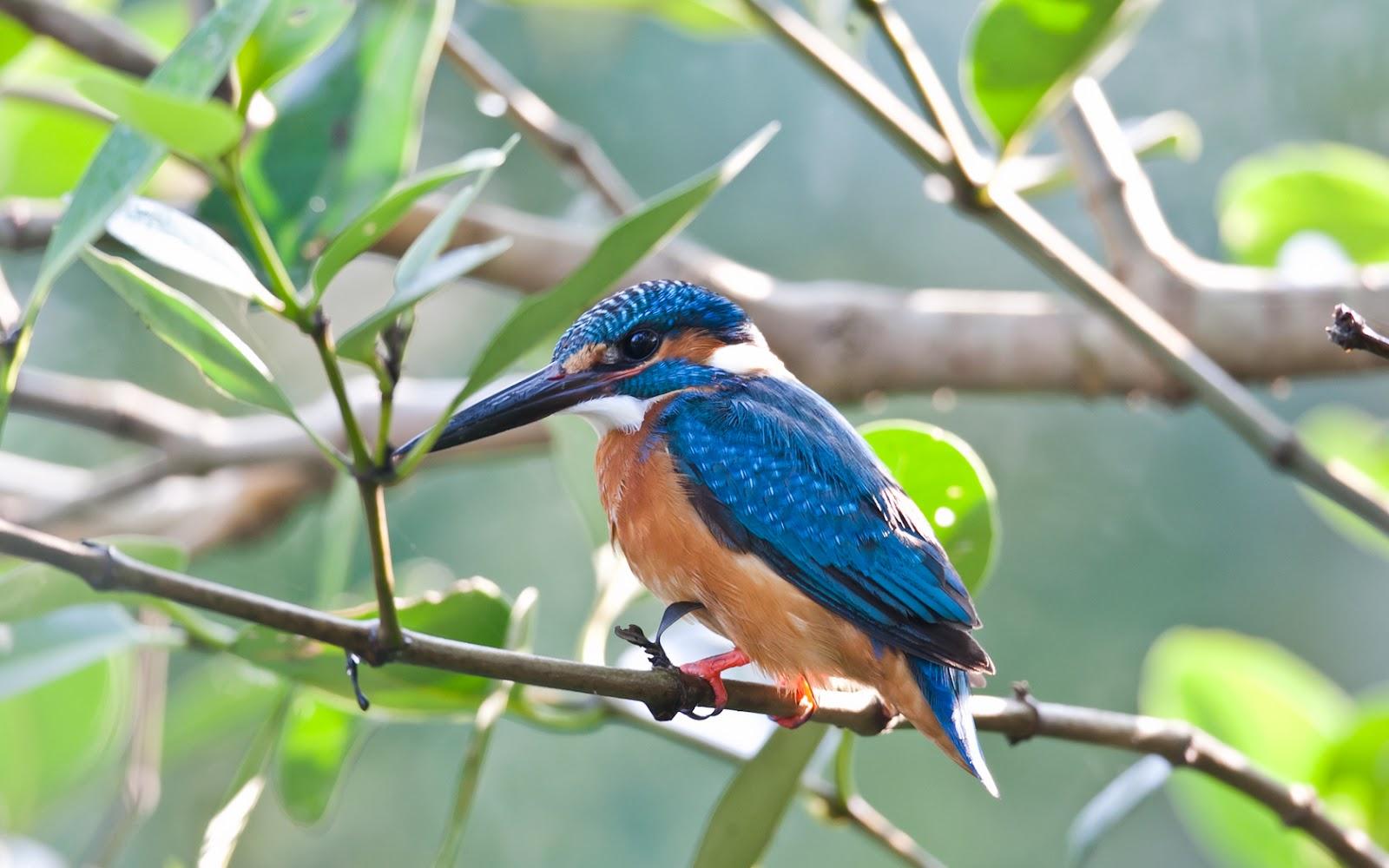 http://2.bp.blogspot.com/-jddu5Rzz_9A/T0fDoQNJScI/AAAAAAAAU7k/qyb2389o5V4/s1600/aves-exoticas_08.jpg