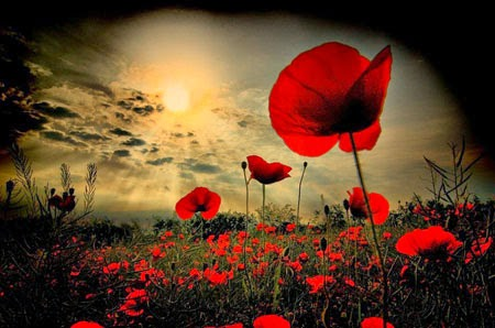 http://pixdaus.com/flanders-poppy-field/items/view/79467/