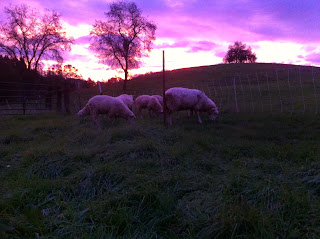 Ranching and Nature