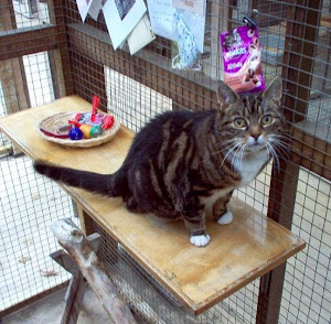 Have a look at some cattery photos